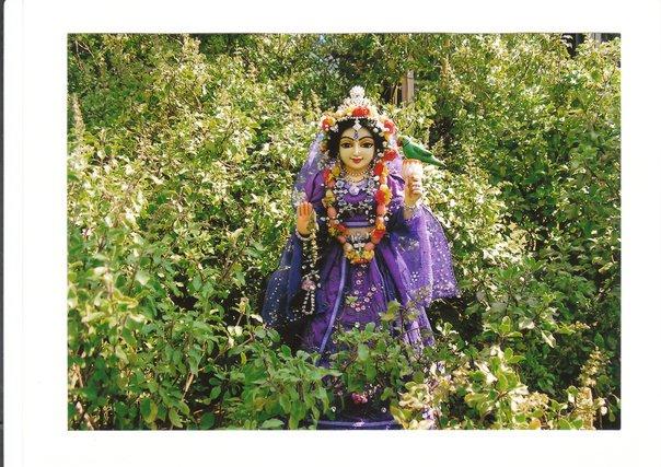 Tulasi Devi - instructions by Srila Prabhupada on how to worship Her